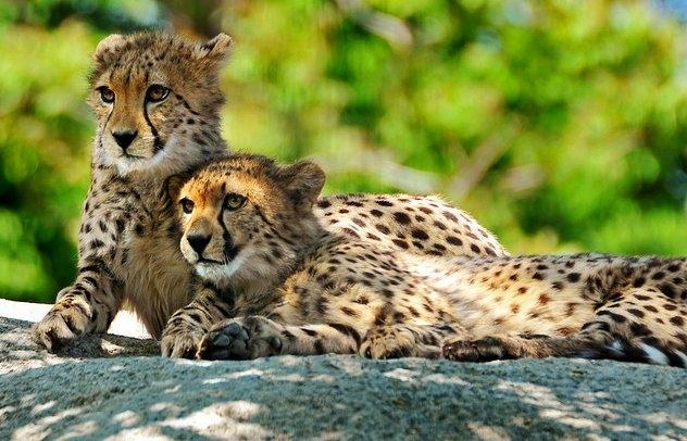 10 grădini zoologice pe care trebuie să le vezi