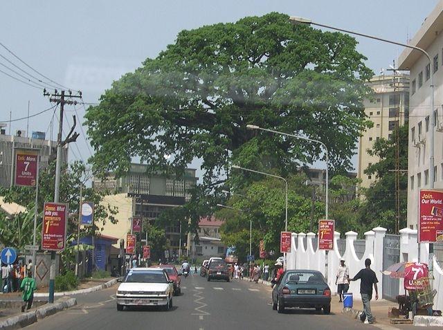 Copacul de bumbac