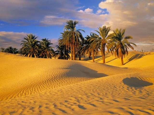Arabian Desert Oasis
